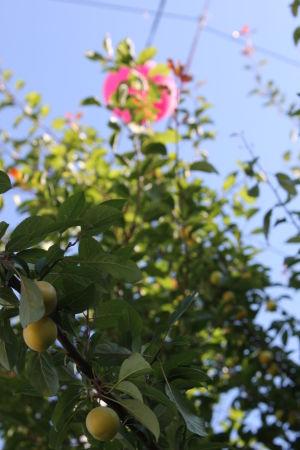 Frukt och ballonger