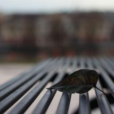 Löv på en bänk
