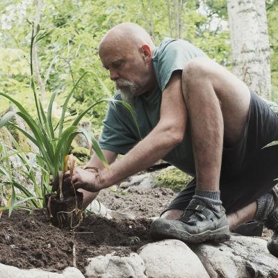 Puutarhuri Esa Kallio istuttaa kasvia Hörtsänän arboretumissa Orivedellä.