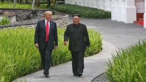 Donald Trump och Kim Jong-un promenerar längs med en stig.