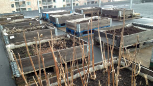 cityodling, växter, takodling