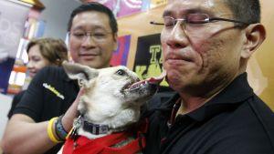 Hjältehunden Kabang återvände hem.