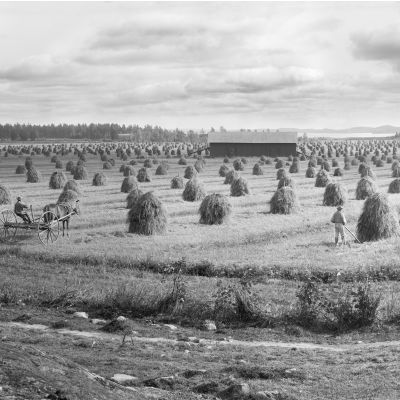 Mustialan maanviljelysopiston pelto vuonna 1899