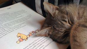 Kissa ja Nalle Puh