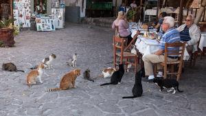 Strandrestaurang i Skala Sykamineas på Lesbos.