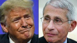 Virusråden från President Trump och chefsepidemiolog Fauci har alltid sett olika ut, men numera är Fauci inte inbjuden på presskonferenser i Vita huset längre.