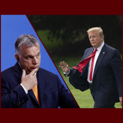 Donald Trump och Viktor Orban.