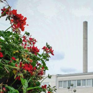 Kuvan etualalla punainen kukka, taustalla toria ja tehtaanpiippu