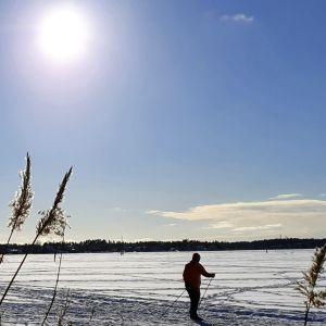 Solen skiner över skidåkarna på Gammelstadsviken i Helsingfors på fastlagssöndagen.
