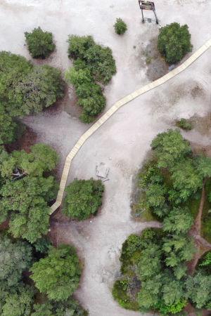 Ett flygfoto visar gröna tallar som växer vid en strand. Bland tallarna startar ett promenadstråk i trä som går ut i sanden.