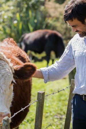 Kirurgi Richard Babor silittää lehmää.