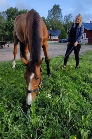 En häst betar i gräset. En ung kvinna, Emilia Hellman, står bredvid.