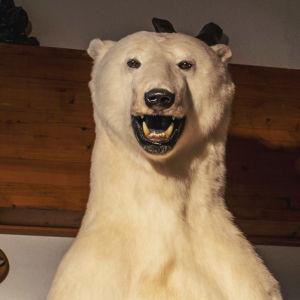 Isbjörnsstaty som ser ut som en uppstoppad isbjörn.