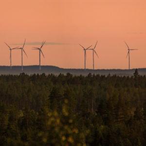 Vindkraftverk i horisonten av en skogshöjd.