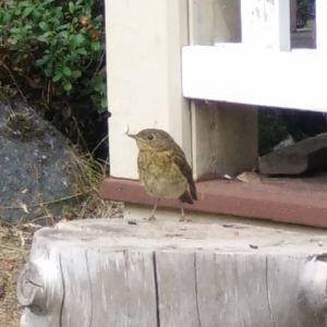 Linnéa har en liten fågel som springer runt lekstugan och undrar vad det är.