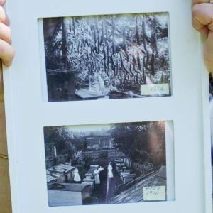 Gamla fotografier från Engströms handelsträdgård.