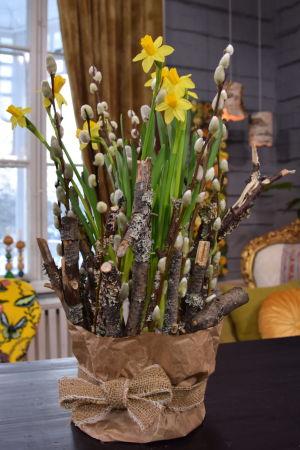 En kruka med gula narcisser som dekorerats med mossiga grenar och videkvistar.