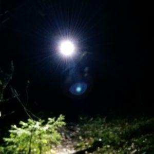 En orienterare på en stig lyser med sin pannlampa rätt mot tittaren.
