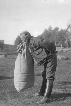 En man lyfter en stor tung säck med bara sina tänder. Bilden är tagen 1931 i Närpes, Kalaks.