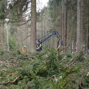 Skogsavverkningsmaskin utför plockhuggning.