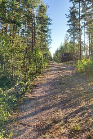 En skogsväg löper igenom en skog med både barrträd och lövträd. Solen skiner.