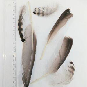 Uffe skickade fjädrar som behandlades tidigare. Går det nu att se vems de är?