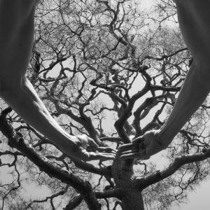 Kuvassa kädet ja puu.