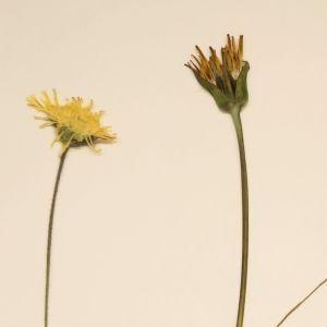 Maj-Lis vill veta vad detta blomster heter.