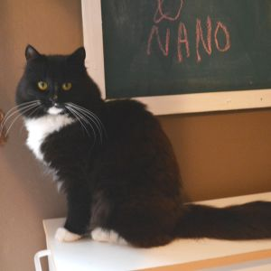 Svart-vita katten Nano i Lovisa katthus.