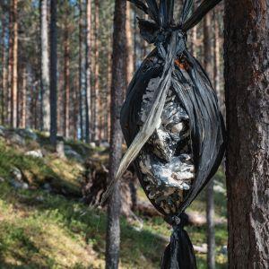 Puusta roikkuu mustaan muoviin kääritty lintua muistuttava olio