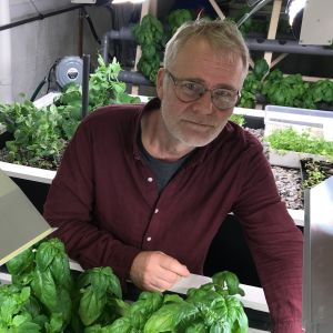 Dag-Tore Johannesen och en massa basilika i en akvaponisk odling i en källare.
