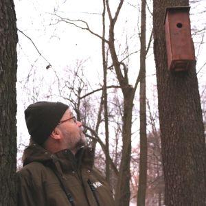 Raimo Pakarinen tittar på fågelholk som hänger på ett träd.