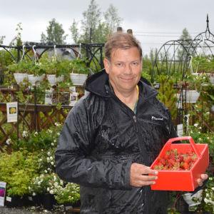 Leif Blomqvist med en korg jordgubbar.
