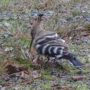 Kerstin fotograferade denna härfågel i Barösund 23 november.