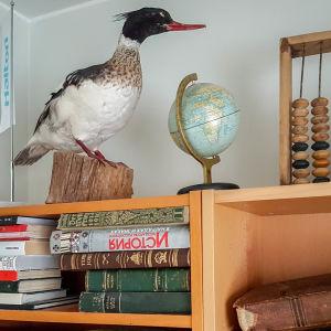 Uppstoppad storskrake på bokhylla.