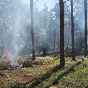 Skogsröjningen på Bylandet i Ekneäs skärgård
