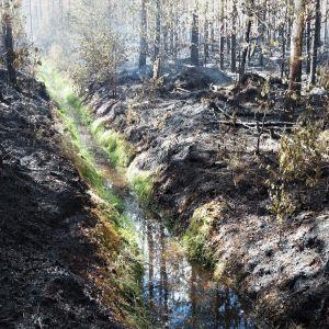 Metsäoja palaneen metsän keskellä.