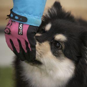 Omistaja antaa herkkua koiralle.