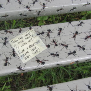 På Hanna Olás parkbänk kryper det myror.