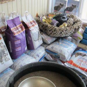 Borgånejdens djurskyddsförenings katthus i Tolkis använder säckvis med kattsand