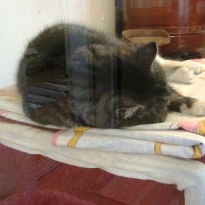 Katten Max tar en siesta i Borgånejdens djurskyddsförenings katthus i Tolkis