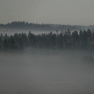sumuinen metsä aamulla
