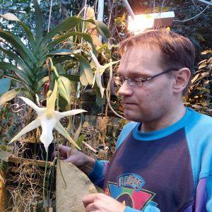 Överträdgårdsmästare Simo Laine med blommande madagaskarstjärna i Botaniska trädgården i Åbo.