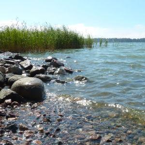 Havet med vass och stenar i förgrunden.