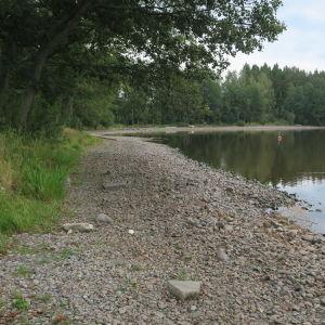 Stenig sjöstrand med skog nära till hands.