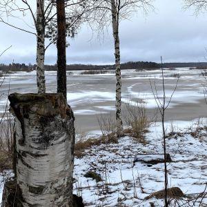 Kuvassa umpeen kasvaneen Vetelin Haapajärven rantaa