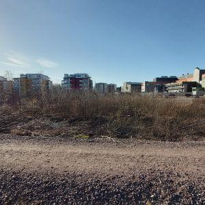 Tomt med buskage och höghus i bakgrunden.
