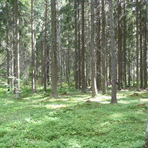 Skog i Gammlbacka.