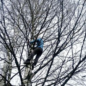 Kvinna klättrar i träd
