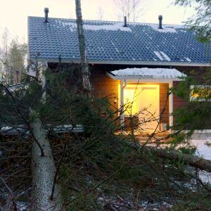 En av granarna föll precis bredvid huset.